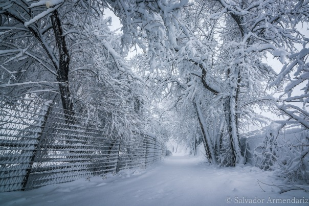 snowy-path